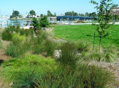 Cryer Park in Oakland, a Bay-Friendly Rated Landscape