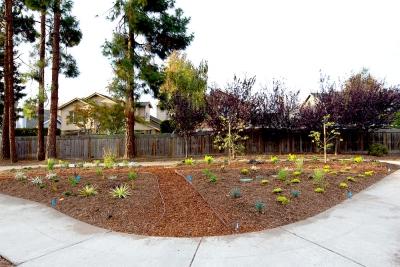 Lawn Conversion Garden Grants StopWaste Home Work School