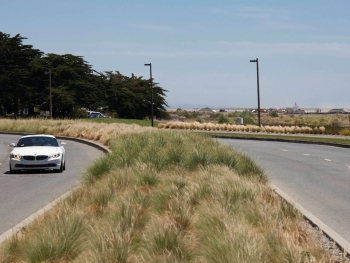Harbor Bay Median, Alameda - A Bay-Friendly Rated Landscape